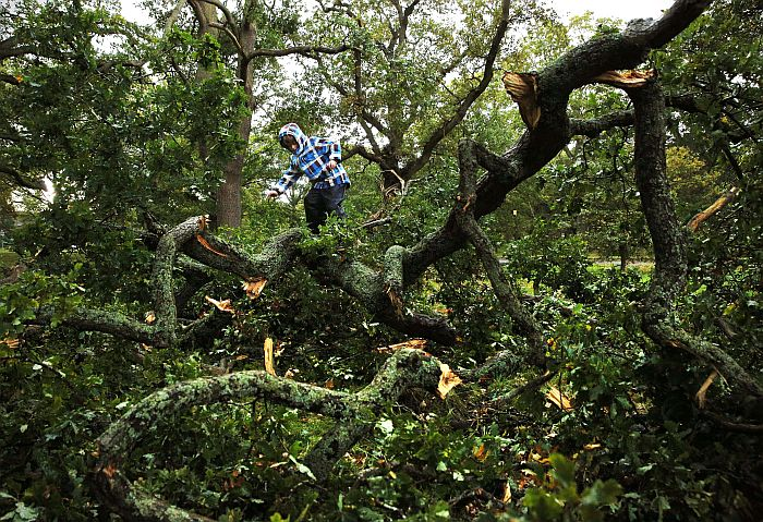 A young boy climbs on a fallen tree on a fallen tree in Oakwood following a storm in Hartley Wintney, in Hampshire, west of London, on October 28, 2013. More than 300,000 homes were left without power across northern Europe and trains and planes cancelled as a fierce storm battered the region, leaving at least three people dead. AFP PHOTO / ADRIAN DENNIS