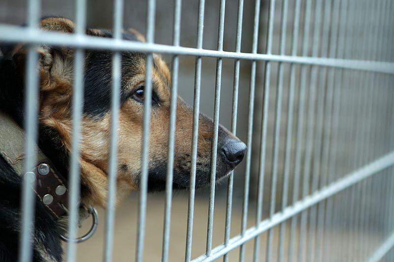"""Suns biedrības """"Dzīvnieku pansija """"Ulubele"""""""" apsaimniekotajā Rīgas pilsētas dzīvnieku patversmē """"Līči""""."""