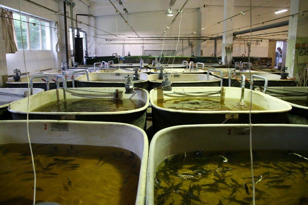 """""""Bior"""" Tomes zivju audzētava."""