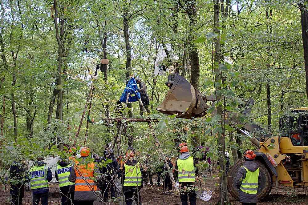 Hambahas mežā 43 mājas kokos ir nojauktas, tātad palikušas vēl astoņas.