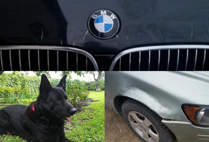 Faktiskos bojājumus Jāņa automašīnām bija nodarījis viņa paša suns Rūnijs, cenšoties aizbiedēt nelūgtos viesus.