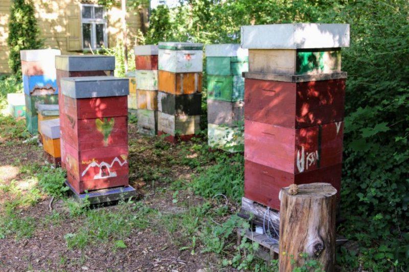 Projektā iesaistītā drava LU Botāniskajā dārzā Rīgā.