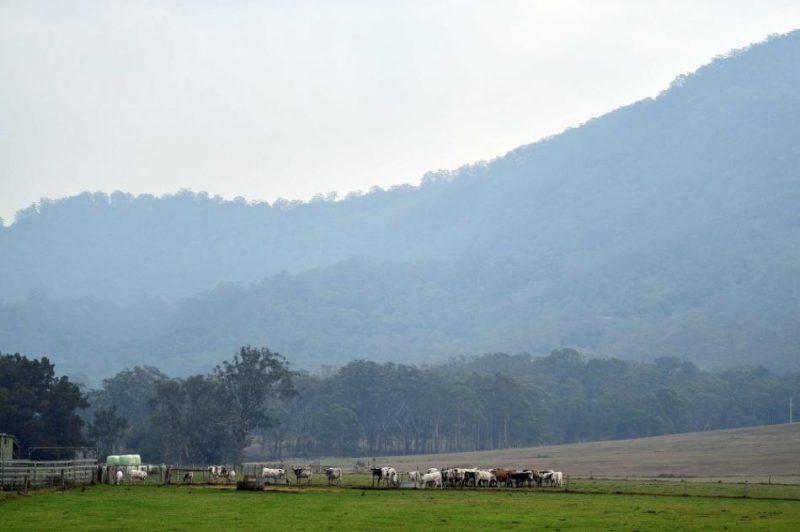 Vairākus meža ugunsgrēkos smagi cietušos Austrālijas austrumu rajonus ceturtdien sasniedzis lietus.