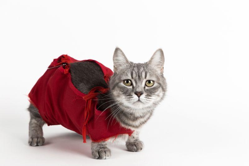 Kaķi – tik līdzīgi un tik dažādi!