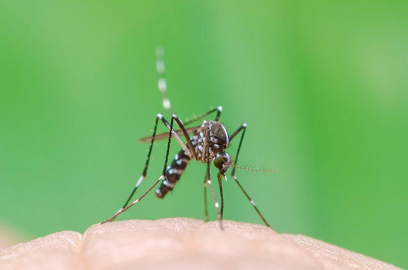 Tā dēvētais Āzijas tīģermoskīts jeb baltpunktu ods (Aedes albopictus) arvien plašāk izplatoties Eiropā. Tas var pārnēsat Zikas, Denges, čikunguņjas, Rietumnīlas vīrusu un arī dzelteno drudzi.