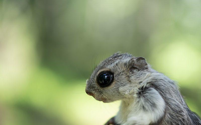 Lidvāvere egļu mežā Vāsā Somijā var justies pasargāta no izzušanas.