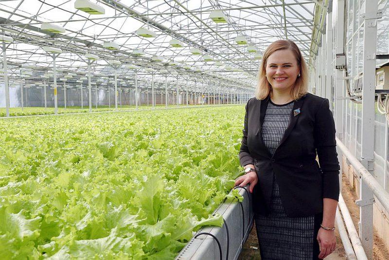 """""""Visas šķirnes tiek pielāgotas augšanas periodam. Ierasti sezonā tiek saražoti ap 700 000 salātu podiņu. Ja pašizmaksa spētu pieaugt lineāri ar cenu – tas būtu lieliski,"""" uzskata SIA """"Rītausma"""" īpašniece Lāsma Bekina."""