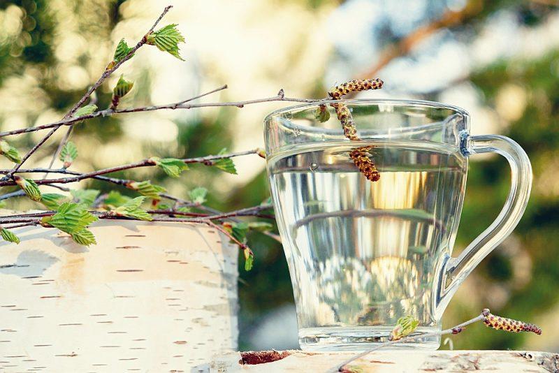 Pavasarī ūdens vietā var baudīt svaigi tecinātu bērzu sulu.