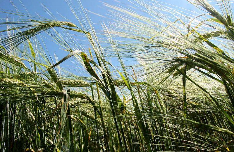 Eiropas Komisijas izstrādātais plāns paredz uzlabot bioloģisko produktu ražošanu un patēriņu Eiropas Savienībā, tostarp līdz 2030. gadam panākt, ka 25% lauksaimniecības zemes tiek izmantoti bioloģiskajai lauksaimniecībai, kā arī ievērojami palielināt bioloģiskās akvakultūras produkcijas daudzumu.