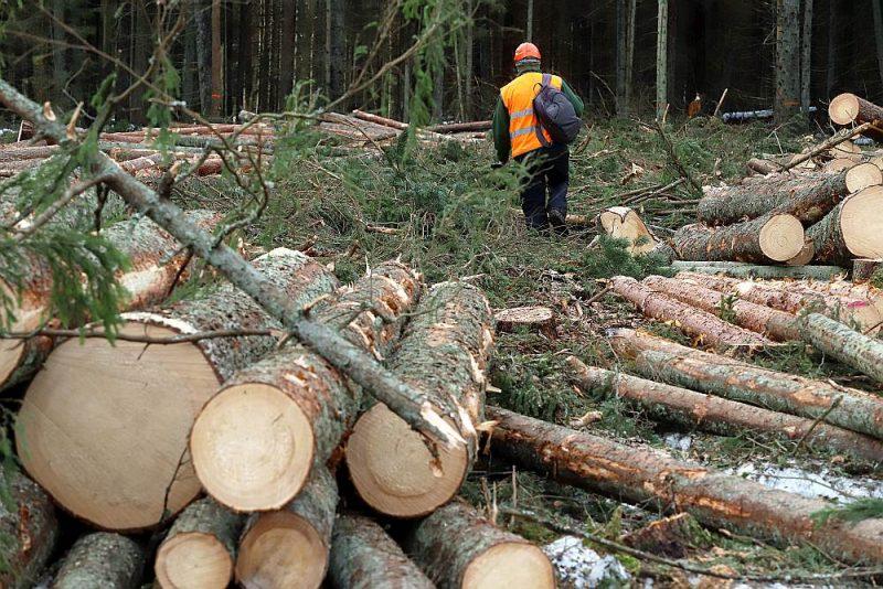 Salīdzinājumā ar citām Eiropas valstīm Latvijas mežu apsaimniekošanas intensitāte ir vidēja, un tāpat kā Eiropā kopumā Latvijā koksnes pieaugums pārsniedz ciršanu.