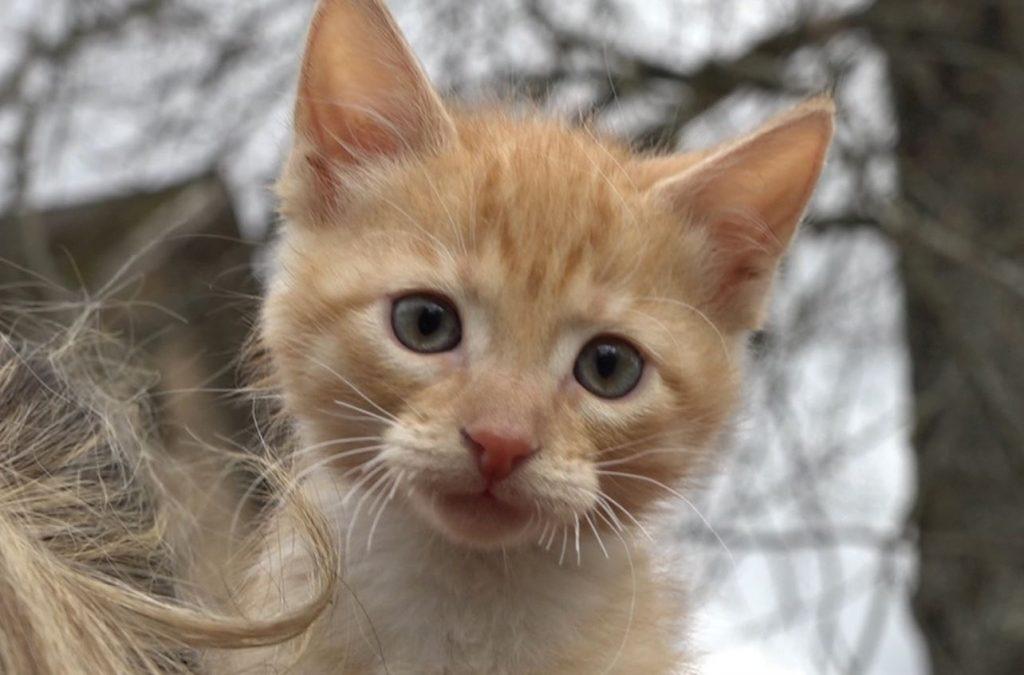 Valkā no slīcināšanas Pedeles upē izglābtais kaķēns.