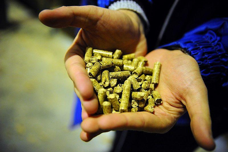 """Igaunijas mežrūpniecības un enerģijas grupa AS """"Graanul Invest"""" plāno būvēt koksnes granulu rūpnīcu Brocēnos, ieguldot 22 miljonus eiro. Paredzētā ražošanas jauda – līdz pat 250 000 tonnām koksnes granulu gadā."""