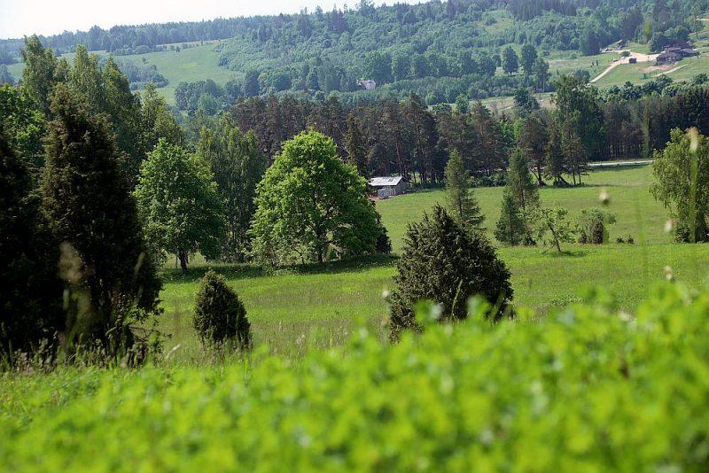 Drubazu pļava Sabiles pievārtē ir labs piemērs dabas daudzveidības vairošanai, gudri apsaimniekojot bioloģiski vērtīgos zālājus.