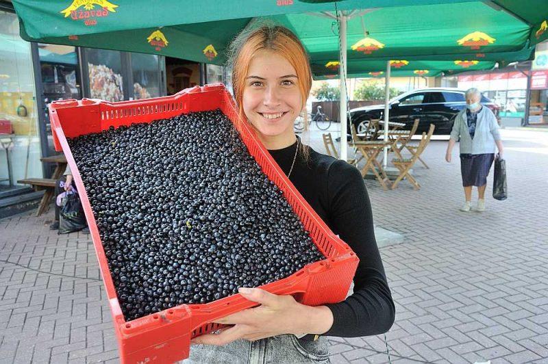 Rīgas Centrāltirgū Elvīra tirgo mellenes, kas lasītas Smiltenes pusē. Sausuma ietekmē mellenes ir sīkas un raža – pieticīga.