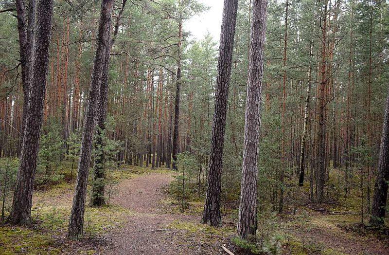 """Meža aktīvu pārvaldīšanas kompānija SIA """"Dižozols Investments"""" ar pūļa finansējuma piesaistes platformas """"Crowdestor"""" starpniecību piesaistījusi 2,77 miljonu eiro investīcijas īpašumu iegādei nolūkā izveidot meža fondu. Piesaistītās finanses ļauj uzņēmumam iegādāties papildu īpašumus jaunajam fondam un paplašināt darbību, ietverot mežizstrādi, augsnes sagatavošanu, koku stādīšanu un jaunaudžu kopšanu ar mērķi būtiski palielināt meža īpašuma vērtību."""