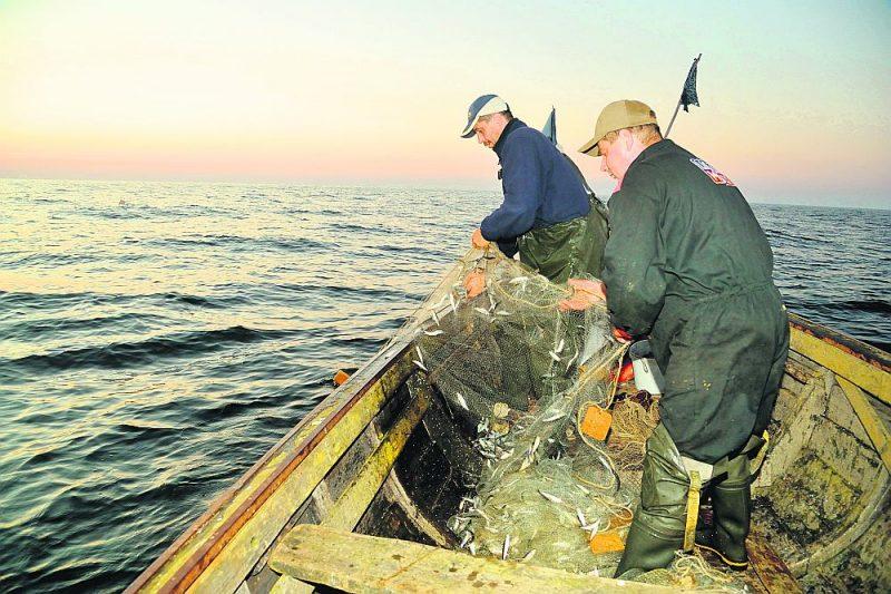 Kopš 1977. gada zvejniekiem ļauts arvien mazāk zvejot, arī nākamgad šī tendence saglabājas, izņēmums ir reņģes līcī un brētliņas.